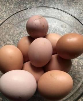 Домашние яйца 50 р