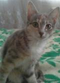 Кошечки, Головино