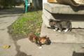 Милые котята ждут любящих хозяев, Свободный