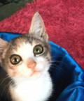 Котенок ищет дом, Кормиловка