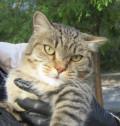 Кошка, Омск