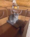 Котик ищет дом, Омск