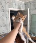 Отдам котят в добрые руки, Балашов
