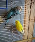 Попугаи с клеткой, Чебоксары