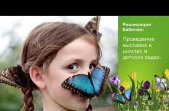 Высоко рентабельный бизнес ферма Живых Бабочек Pro