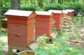 Пчелосемья, пасека, Ольховатка