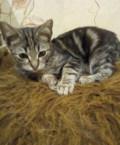 Котенок- девочка от мышеловки в добрые руки, Губкин