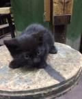 Отдам котёнка, Новодвинск